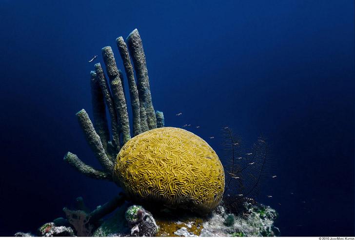 immersioni Belize