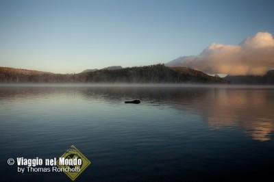 Tasmania mare