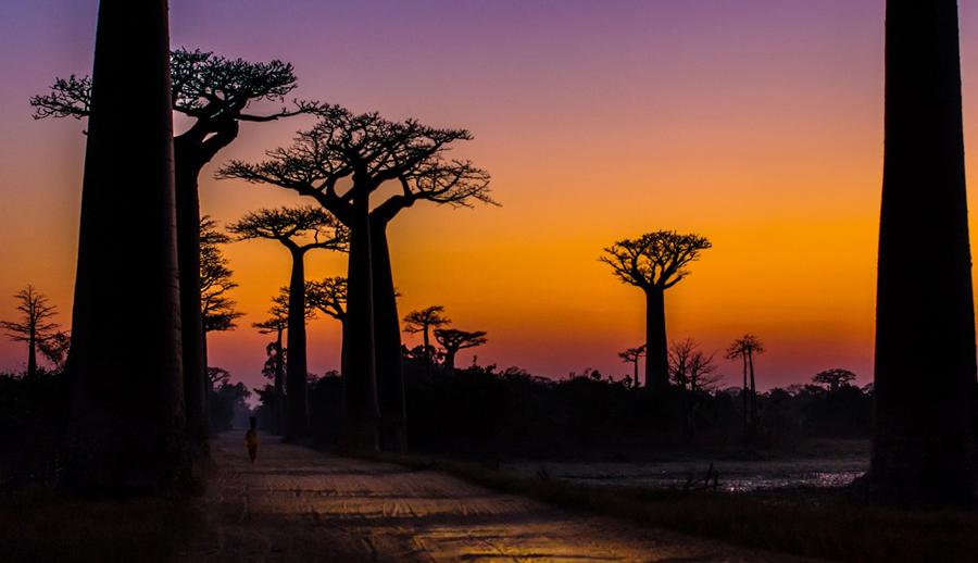 Viale dei baobab - Madagascar