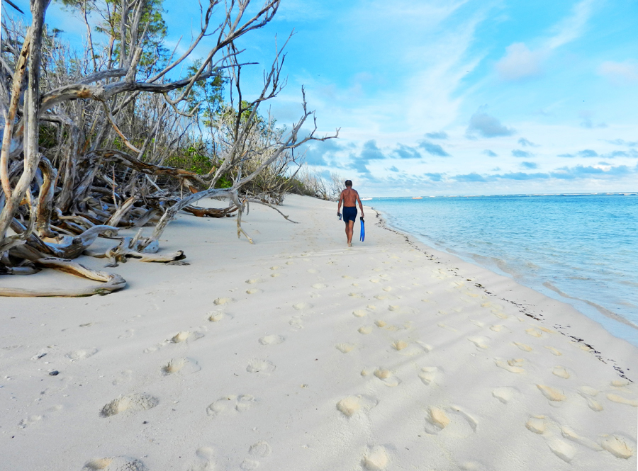 Bird Island, ecoturismo alle Seychelles