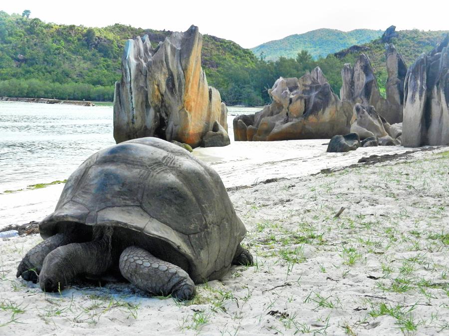 Seychelles - Curieuse - Baie Laraie