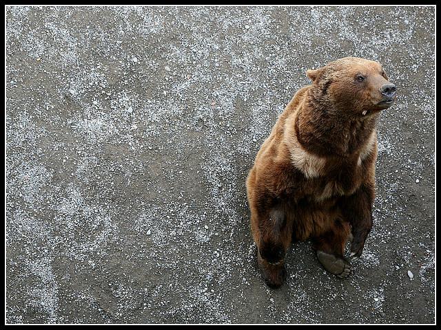 Cosa vedere a Berna: Parco degli Orsi
