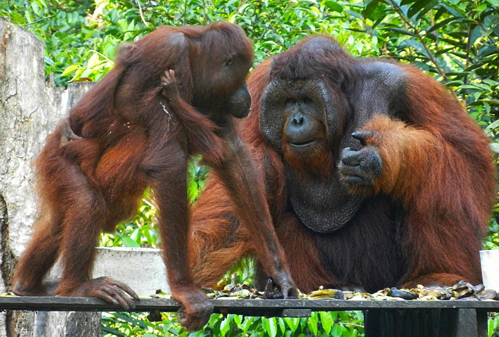 Kalimantan viaggio