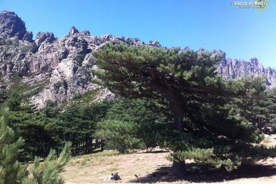 Cosa vedere in Corsica: entroterra