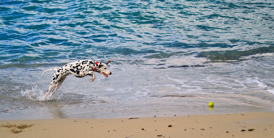 Spiaggie per cani in Italia