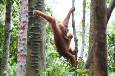 Bukit Lawang - Sumatra