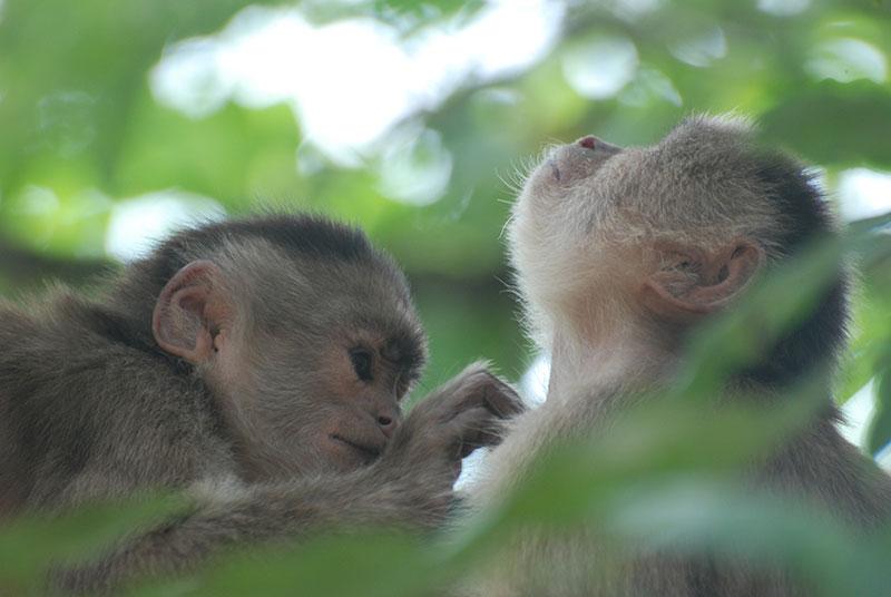 scimmie amazzonia ecuador