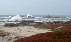 Pacific Grove, baia di Monterey, California