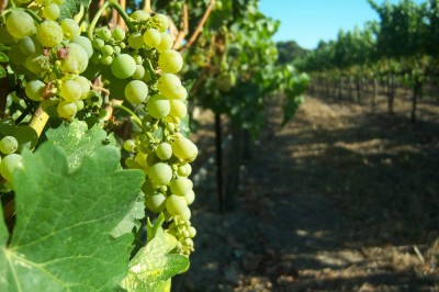 Santa Barbara Wine Country-