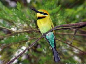 Melbourne bird - Australia