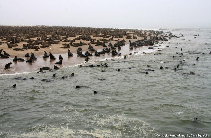 Namibia - Otarie a Walvis Bay