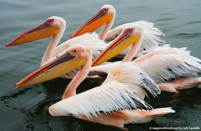 Namibia - fenicotteri a Walvis Bay