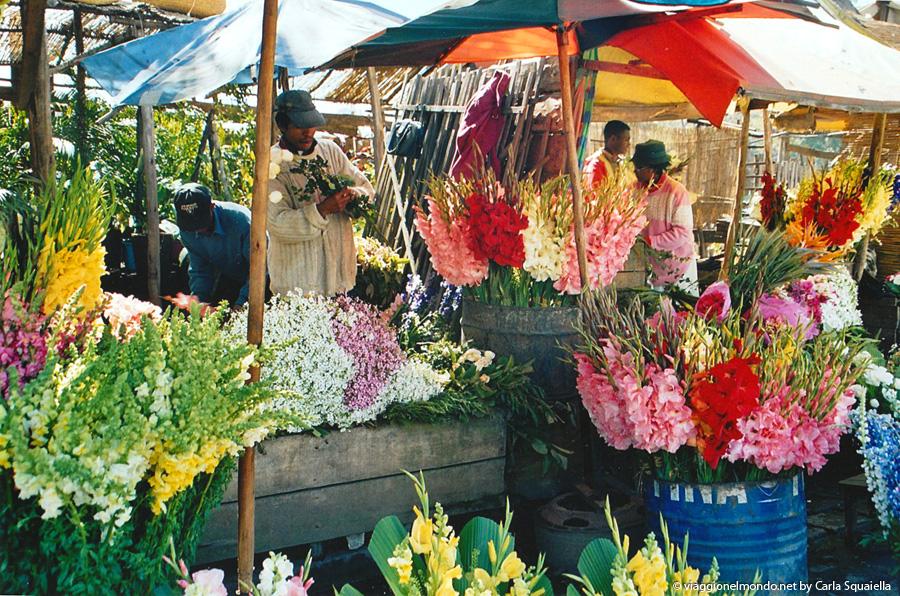 Mercato dei fiori, Tana