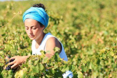 strada del vino Provenza