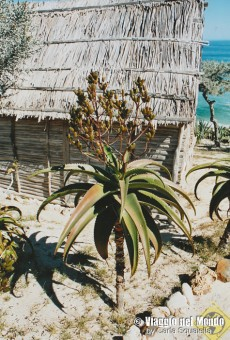Ecolodge Madagascar, Da Gigi