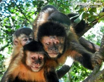 Monkeyland, Sud Africa