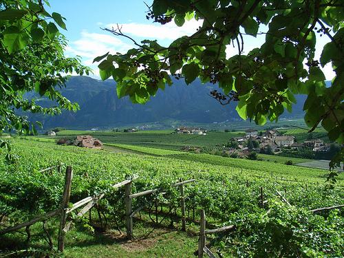 Alto Adige strada del vino - Foto di suedtirol.altoadige