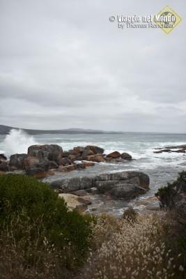 Tasmania costa est