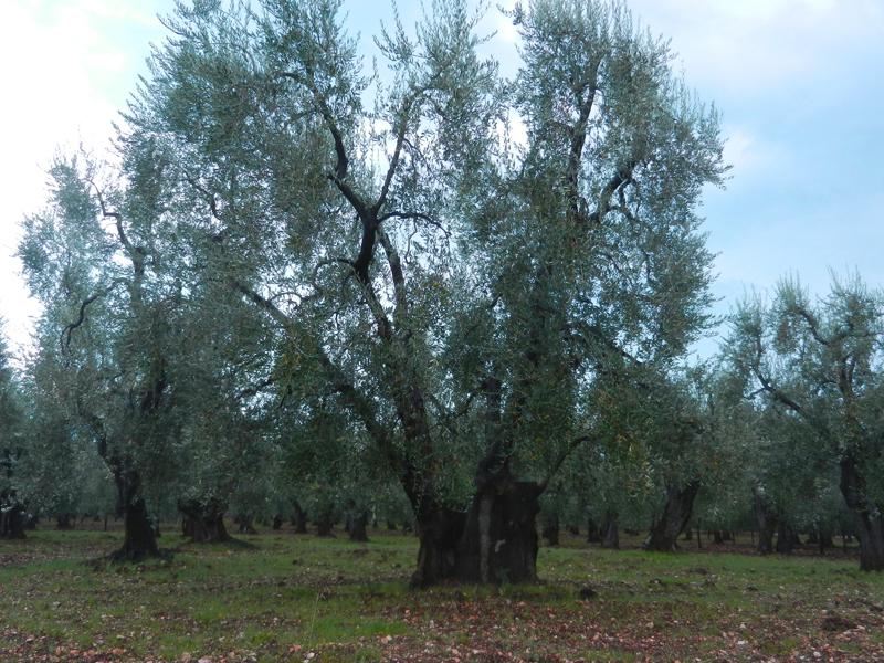 Gargano, Foresta Umbra