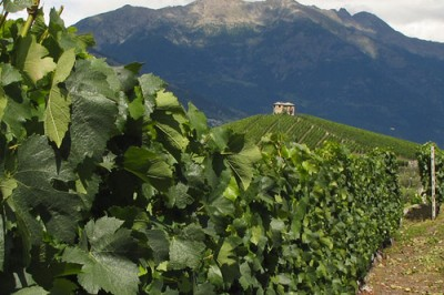 Valle d'Aosta, strada del vino