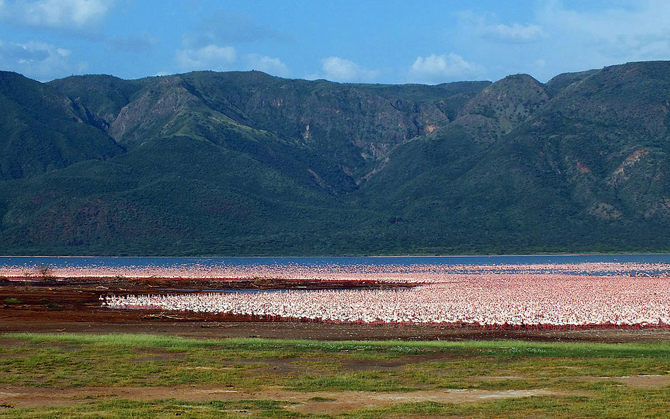 Lago Bogoria