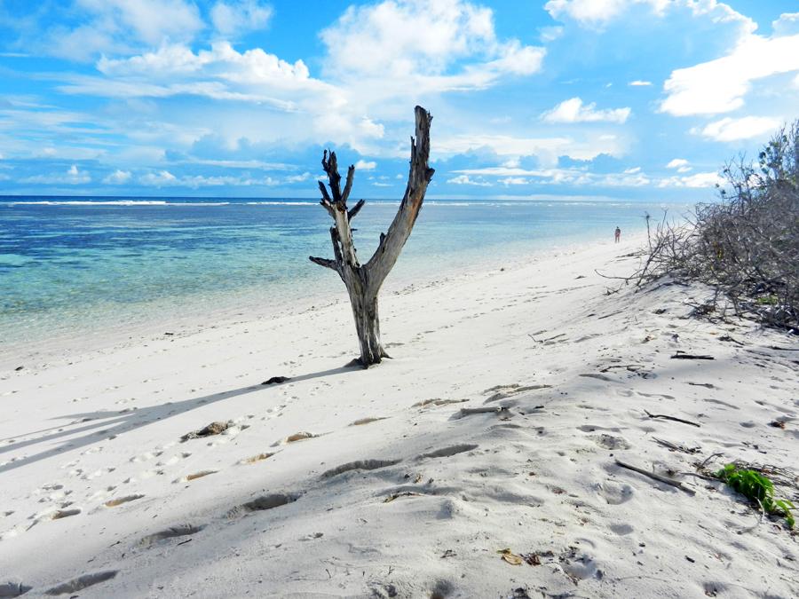 Bird Island - ecoturismo