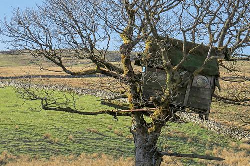 Treehouse le case sull albero per tornare bambini - Progetto casa sull albero per bambini ...