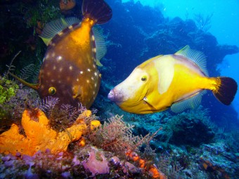 Cozumel, barriera corallina