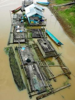 Kalimantan, Mahakam River: Jantur