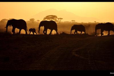 Tanzania di Giovanni Gori ©