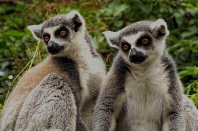viaggi Madagascar