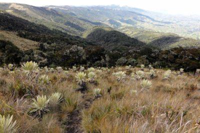 guandera, ecuador