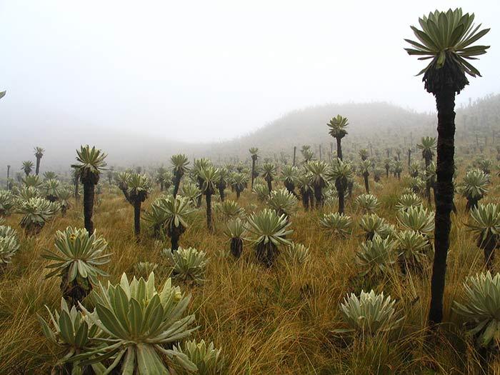 Paramo andino, Ecuador