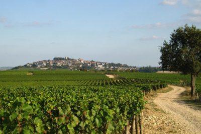 Sancerre, Vini della Loira