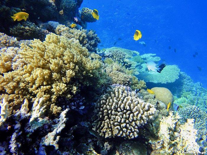 Mar Rosso: Berenice