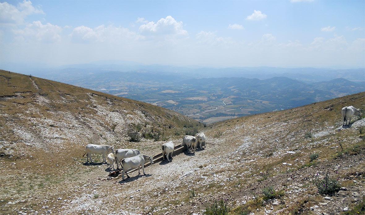 Monte Cucco Trekking