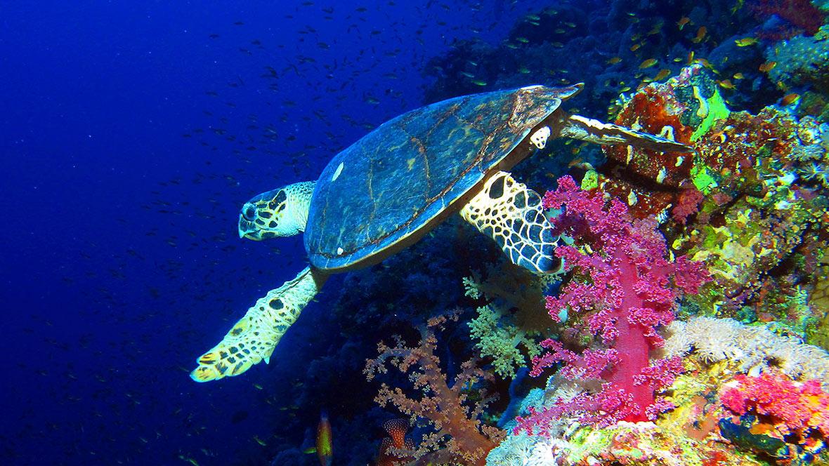 Immersioni Mar Rosso Marsa Alam