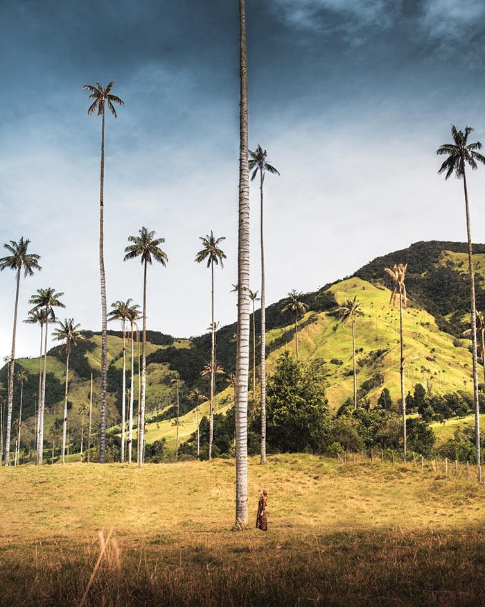 Le palme più alte del mondo