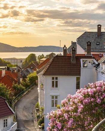 Cosa vedere in Norvegia: mercato pesce Bergen
