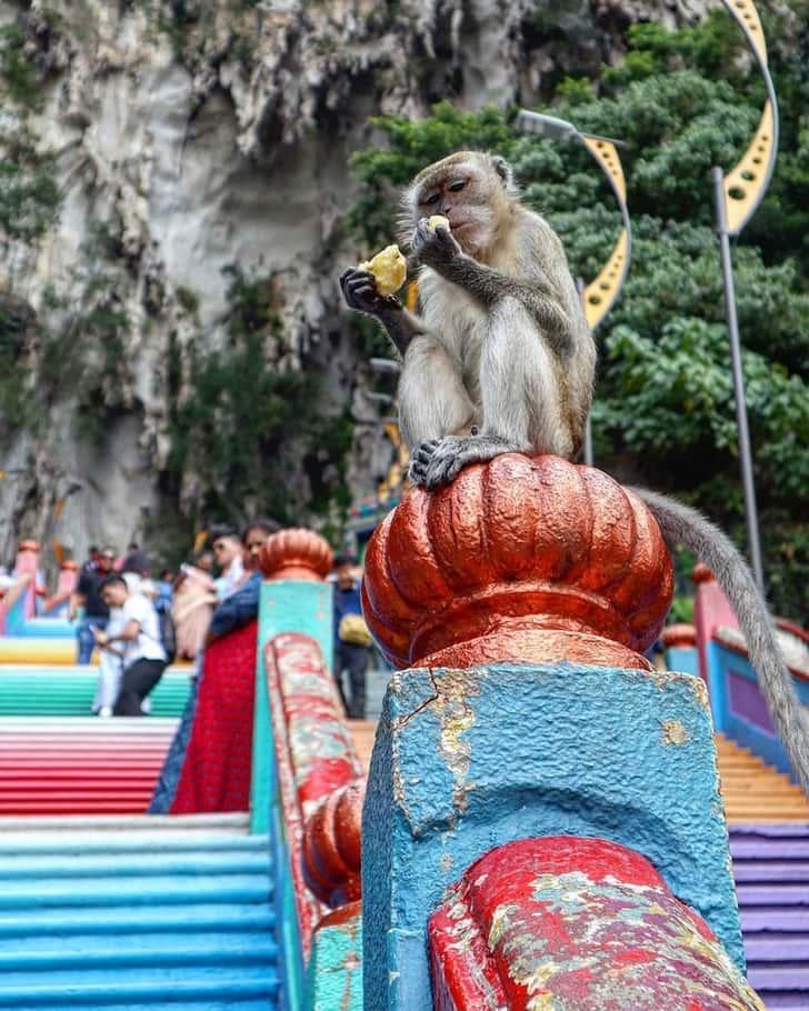 Scimmie alle Grotti di Batu