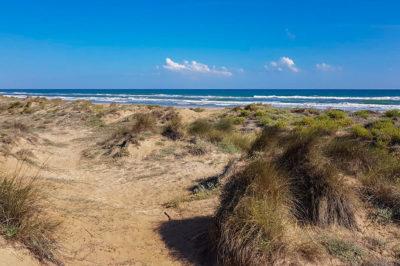 Oliva, spiaggia