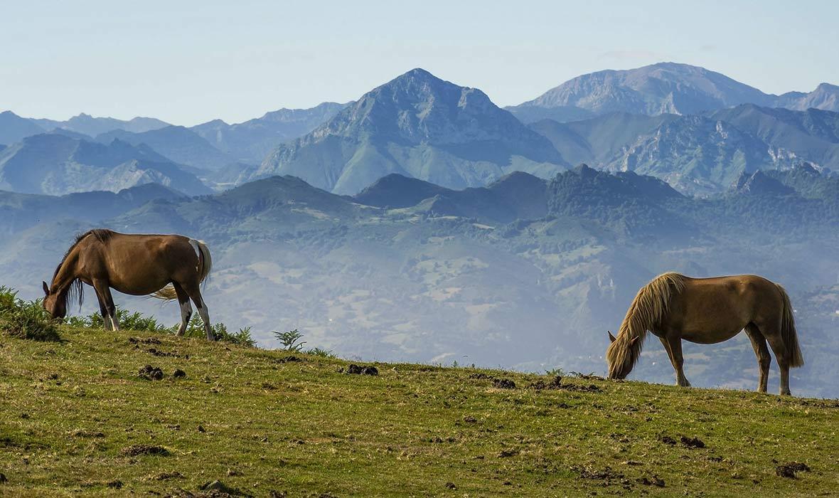 Asturie, Picos de Europa